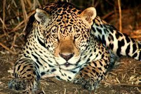 Pantanal 4